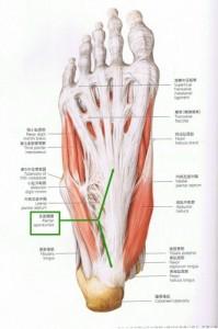 sokutei-anatomy-679x1024-332x500